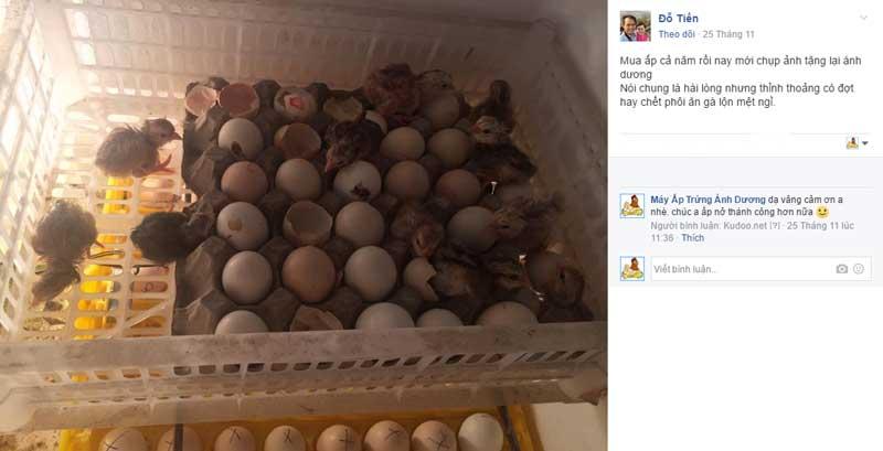 Khách hàng đánh giá Máy ấp trứng gà Ánh Dương - Ảnh 9
